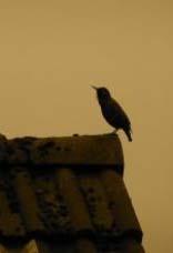 https://preacher1.files.wordpress.com/2012/02/bird-on-roof.jpg