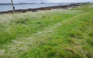 Grassy Path Sm