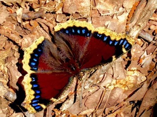 Butterfly on Trail NC Zoo