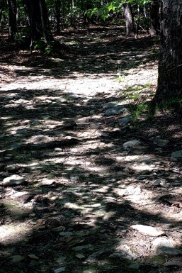 Trail at NC Zoo